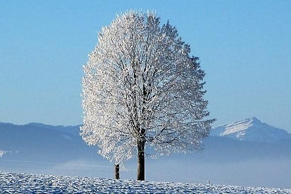 3.2.2 Cambio Generazionale albero con neve